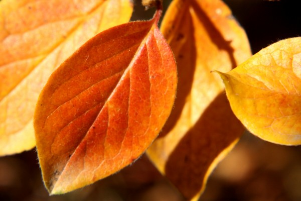 autumn-leaves-close-up-600x400